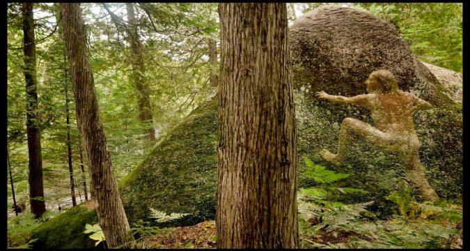 Forest Myths