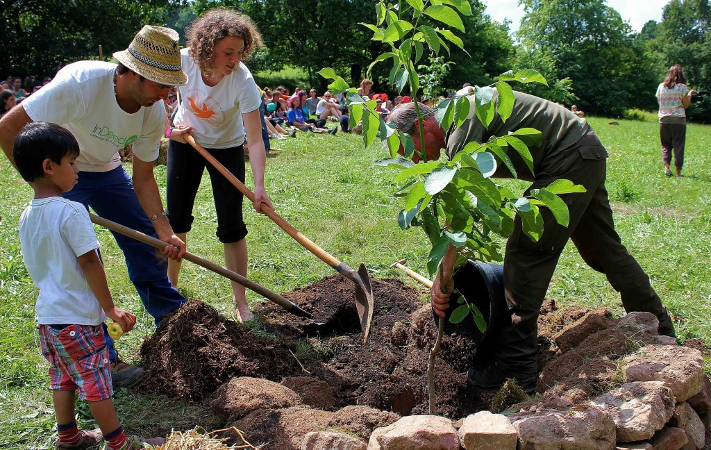 Plant a tree for Peace